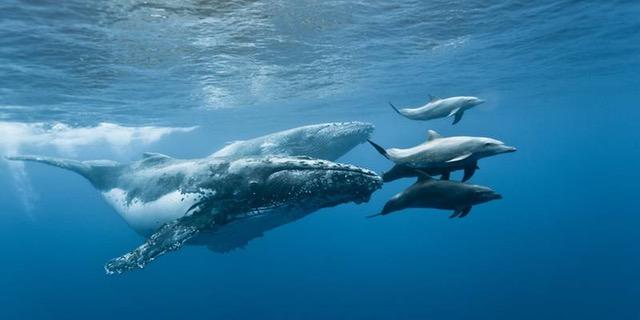 dauphins baleines (1)