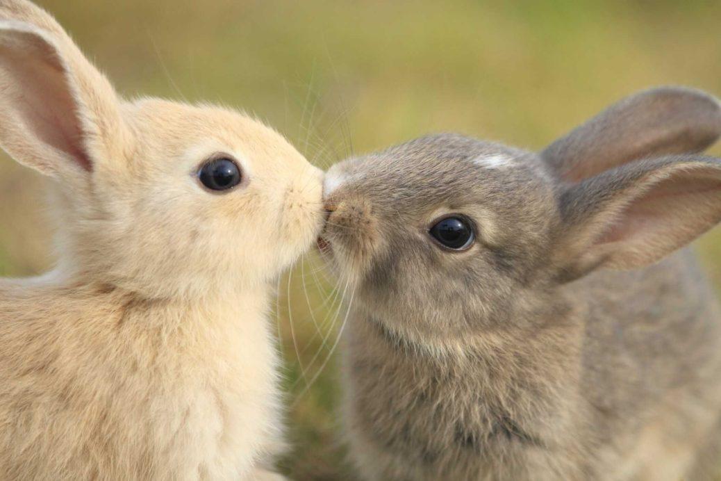 Cours communication animale avec les lapins