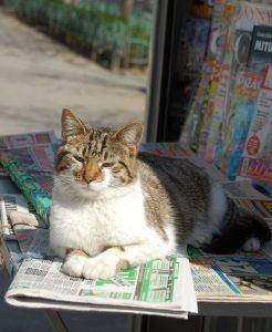 Chat presse contemplatif après la lecture de bons reportages
