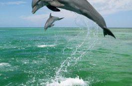 dauphins sauteurs
