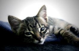 regard de chat